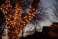 Upp grunt djup för nära yttre nattetid av fältmaterielfotoet av trädet som slås in med julljus Royaltyfria Bilder