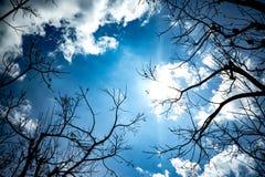 Upp i skyen Arkivfoton