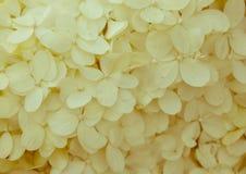 Upp nära tappning tonad vanlig hortensia Royaltyfri Bild