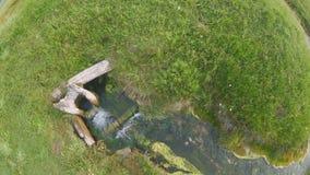 Upp sikten av knirket som flödar i grönt nytt gräs stock video