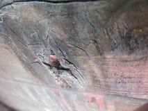 Upp slutskott av buckligt punkterat trä royaltyfri foto