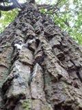 Upp trädet Royaltyfria Foton
