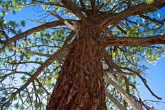 Upp trädet Arkivfoton