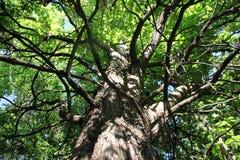 Upp trädet Royaltyfria Bilder