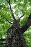 Upp trädstammen fotografering för bildbyråer