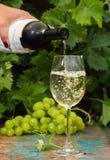 Uppassare som häller ett exponeringsglas av iskallt vitt vin, utomhus- terrass, royaltyfri foto