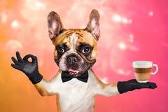 Uppassaren f?r den franska bulldoggen f?r den roliga hunden r?nar visar den ljust r?dbrun i en svart fluga att rymma ett exponeri royaltyfria bilder