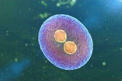 uppdelning för cell 3D stock illustrationer