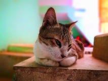 Uppeh?lle f?r kattfamilj i hemmet fotografering för bildbyråer