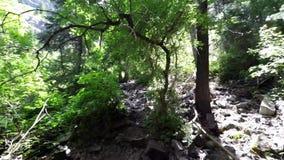 Upper Falls Utah Timelapse Hike stock video