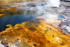 Upper Geyser Basin Bacteria Mat. Bacteria Mat in the Upper Geyser Basin in Yellowstone National Park Royalty Free Stock Photography