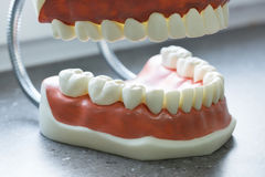 Upper and lower jaw dental model Royalty Free Stock Photos