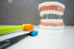 Upper and lower jaw dental model with toothbrushes Stock Photos