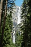 Upper and Lower Yosemite Falls. Through Forest Stock Image