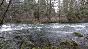 Upper McKenzie River HD Video stock footage