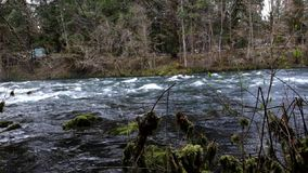 Upper McKenzie River HD Video stock video