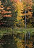 Upper Michigan Fall Colors by Quiet Stream. The leaves are turning colors in this scene as they reflect in the water by a quiet stream. Scene from Upper Michigan royalty free stock photography