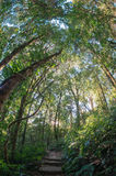 Upper Montane Forest Stock Photography