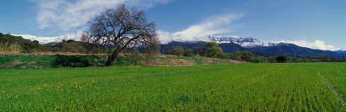 Upper Ojai in the spring Stock Photo