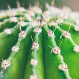 The upper part of the green spiny cactus. View from above. Selective focus royalty free stock photos