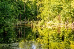 Upper pond, Kytayiv, Kiev Royalty Free Stock Photo