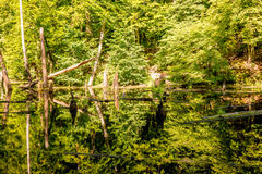 Upper pond, Kytayiv, Kiev Royalty Free Stock Photography