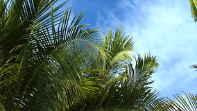 Upper portion of palm tree stock video