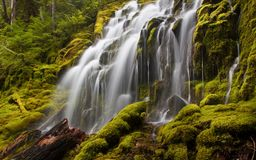Upper Proxy Falls in Oregon with mossy rocks and logs. In the forest stock photos