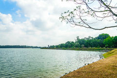 Upper Seletar Park. This photo taken during the dry season in Singapore Stock Photos