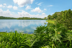 Upper Seletar Reservoir in Singapore Royalty Free Stock Images