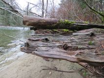 Upper Snoqualmie River Scene, Olallie State Park Stock Photography