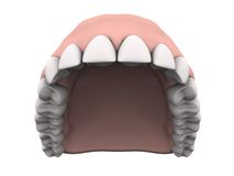 Upper teeth with gums. In white background. Easy to isolate stock images