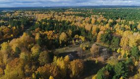 Upper view autumn gold birch and pine forest under grey sky stock video