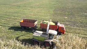 Upper view combine and lorry gather corm for silage. Upper view modern forage harvester and red lorry with trailers gather corm foliage for silage in field stock video