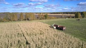 Upper view forager silorator and lorry gather corn. Inspiring upper view forager silorator and lorry with trailer gather corn foliage in field under sky with stock video footage