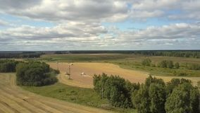 Upper view modern harvesters gather ripe wheat on field. Pictorial upper view modern harvesters gather ripe wheat on yellow field against thick forest on horizon stock video footage
