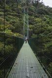 Upphängningbro i Monteverde Costa Rica arkivbild