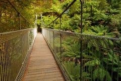 Upphängningbro i skog Arkivbilder