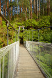 Upphängningbro i skog Arkivbild