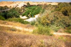 Upphängningbro och Besor bäck i den Eshkol nationalparken, Negev öken Royaltyfri Foto