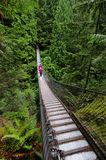 Upphängningbro som korsar en kanjon Royaltyfri Bild