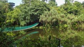 Upphängningbron över sjön på Rainforestupptäcktmitten i Sepilok, Borneo Arkivfoto
