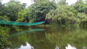 Upphängningbron över sjön på Rainforestupptäcktmitten i Sepilok, Borneo Fotografering för Bildbyråer