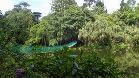 Upphängningbron över sjön på Rainforestupptäcktmitten i Sepilok, Borneo Royaltyfria Bilder