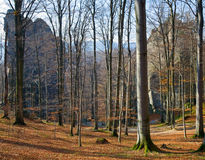 upphöjda stenar för skog Royaltyfria Bilder