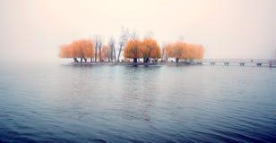 Upphetsa charma landskap med en ö av gula träd i mitt av en sjö i en dimmig morgon royaltyfri fotografi
