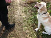 upphetsa för 6 hund Arkivfoto
