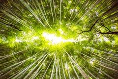 upplösning för jpg för bambudunge hög Royaltyfria Bilder