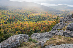 Upplyst Autumn Colors Shrouded In Rain mist Royaltyfri Fotografi