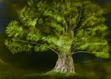 Upplyst ensamt träd i natten Royaltyfri Foto